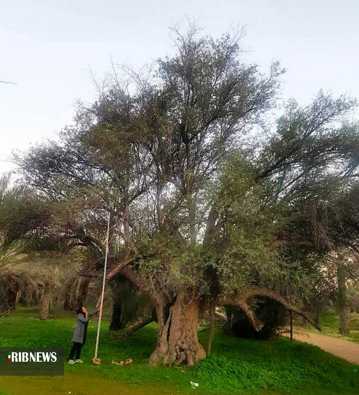 ثبت ملی ۵ اثر طبیعی استان بوشهر