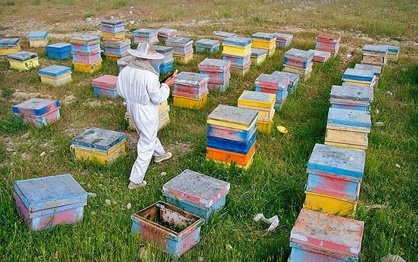 زنبورداران موظف به دریافت مجوز اسکان