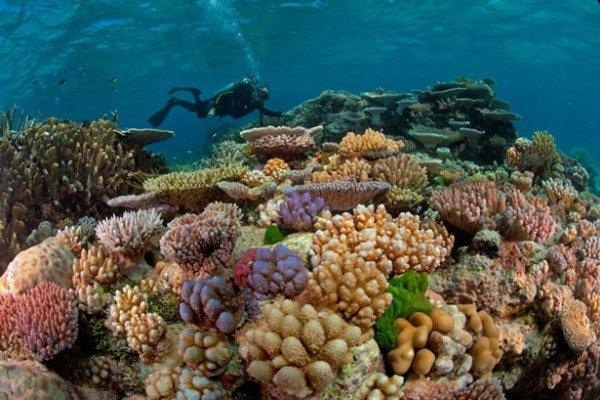 آغاز به کار طرح احیاء و بازسازی زیست بوم های جزیره خارک